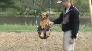 Dog in swing - dog on swing - Video