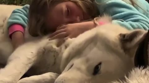 Bedtime snuggles between little girl and her gentle wolfdog