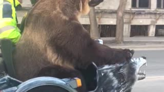 Bear on a Bike - Video