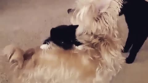 baby puppy catches his mother for some adventure