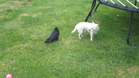 Nevermore and friend