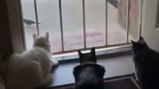 Three Cat and one bird and one Dog - Video