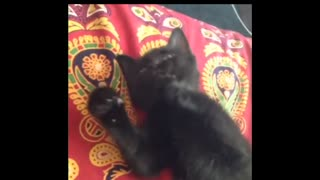 Funny Cats - Best Funny Cat Videos Ever - Funny Kitty Cat Vines Compilation №63 - Video