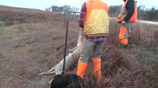 Hunters Save a Deer that's Caught in a Barbwire Fence - Video