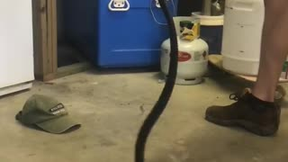 Red Bellied Black Snake in Garage - Video