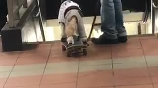 Man walks his dog riding on a skateboard in subway station