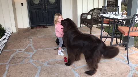 Newfoundland tries to stop best friend from leaving