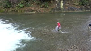The moment the runup salmon was captured in the net (2)