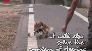 Legless Dog - Video