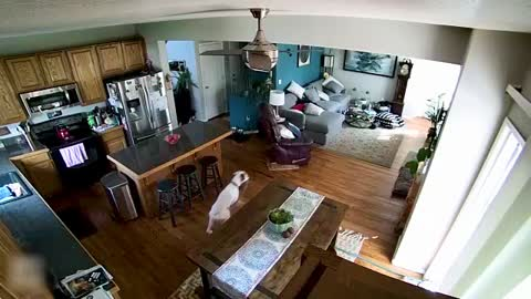 Boxer Turns House Into Personal Waterpark