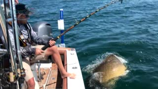 The Biggest Catch of the Day - Video