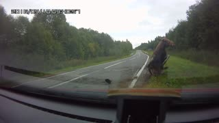 Moose Hit By Car - Video