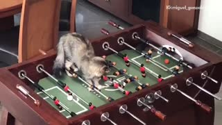 Cat scores goal in foosball - Video