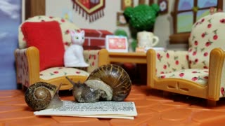 These Kissing Snails Are The Cutest!