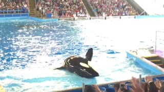 Shamu saying Hello - Video
