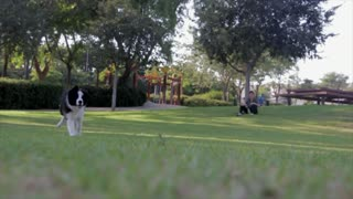 Owner Goes In Park Adventure With Dog ' dog fun time '
