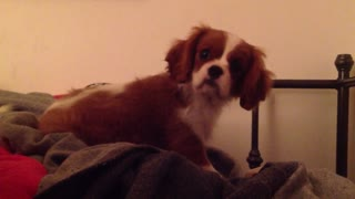 Puppy cuteness overload! - Video