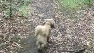 Three Dogs playing in the Wild - Video