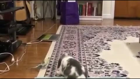 Rabbits playing Next To A Bird in The House