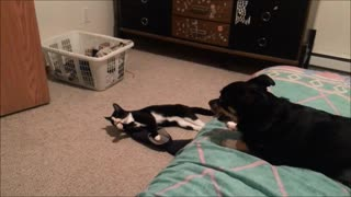 Dog And Cat Besties Playing