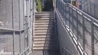 Guy goes for 15 stair skate jump - Video
