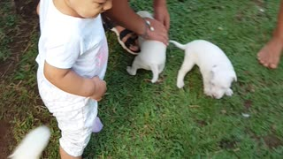 Cute baby kissing puppies for the first time.