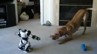 Puppy vs. Robot  - Video