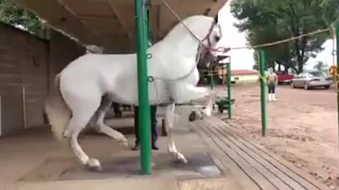 The coach reviews the performance of his Arabian horse after training