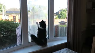 Energetic Cat Loses It When Owner Cleans The Outside Windows - Video