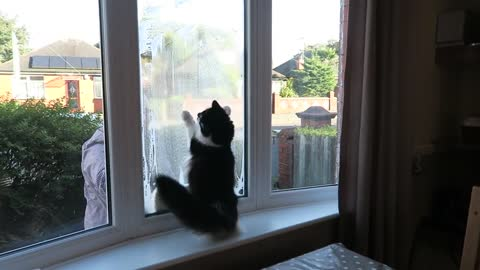 Energetic Cat Loses It When Owner Cleans The Outside Windows