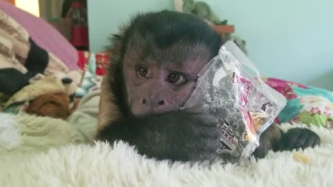 Monkey Makes a Simple Monkey-Made Toy Out of a Plastic Container!