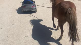 1-Year-Old Pulls Pony Behind Electric Car