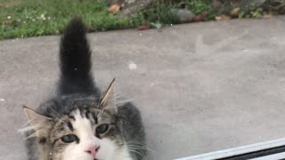 Parrot Plays Peek-A-Boo With Neighbors Cat - Video