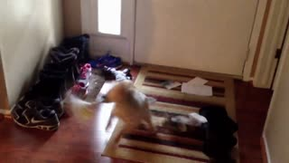Dog attacks the mail slot - Video