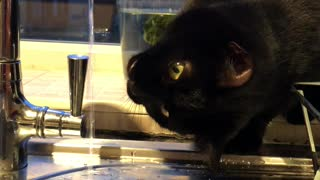 Cat is Captivated by Faucet