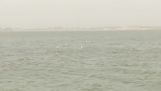Herd Of white birds fly over quron lake