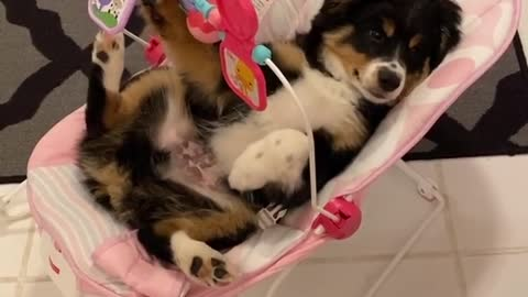 Puppy sits in baby swing and plays with baby's toys