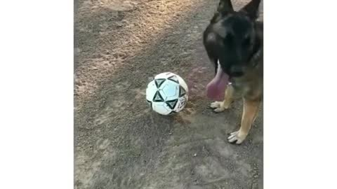 Dogy Likes To Play Football