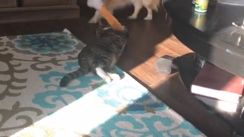 Resilient Cat vs Dog in a game of Tug of War