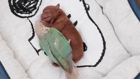 Newborn Pup and Bird Take Nap Together