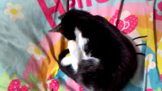 soo cute kitties playing and fighting with each other  - Video