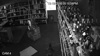 Rogue Raccoon Breaks into a Tennessee Liquor Store - Video