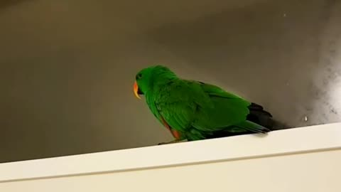 Chatty parrot loves to talk most when he's in the bathroom