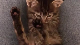 sweet lovly small cat - Video