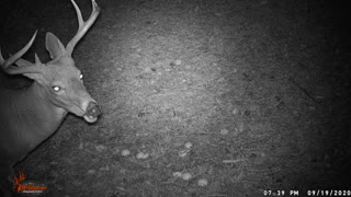 15 Seconds of Whitetail: Episode 3