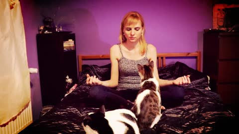 Distracting cats make it difficult for owner to meditate