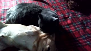 Cat considers a dog to be his child.