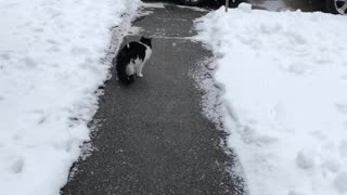 Kitty Loves Catching Snowflakes