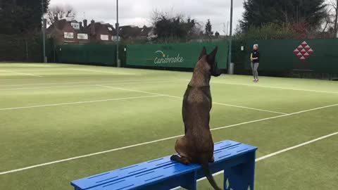 Dog deeply invested in human's tennis match