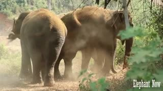 A Group of Elephants Throwing Dirt At Them in A jungle.